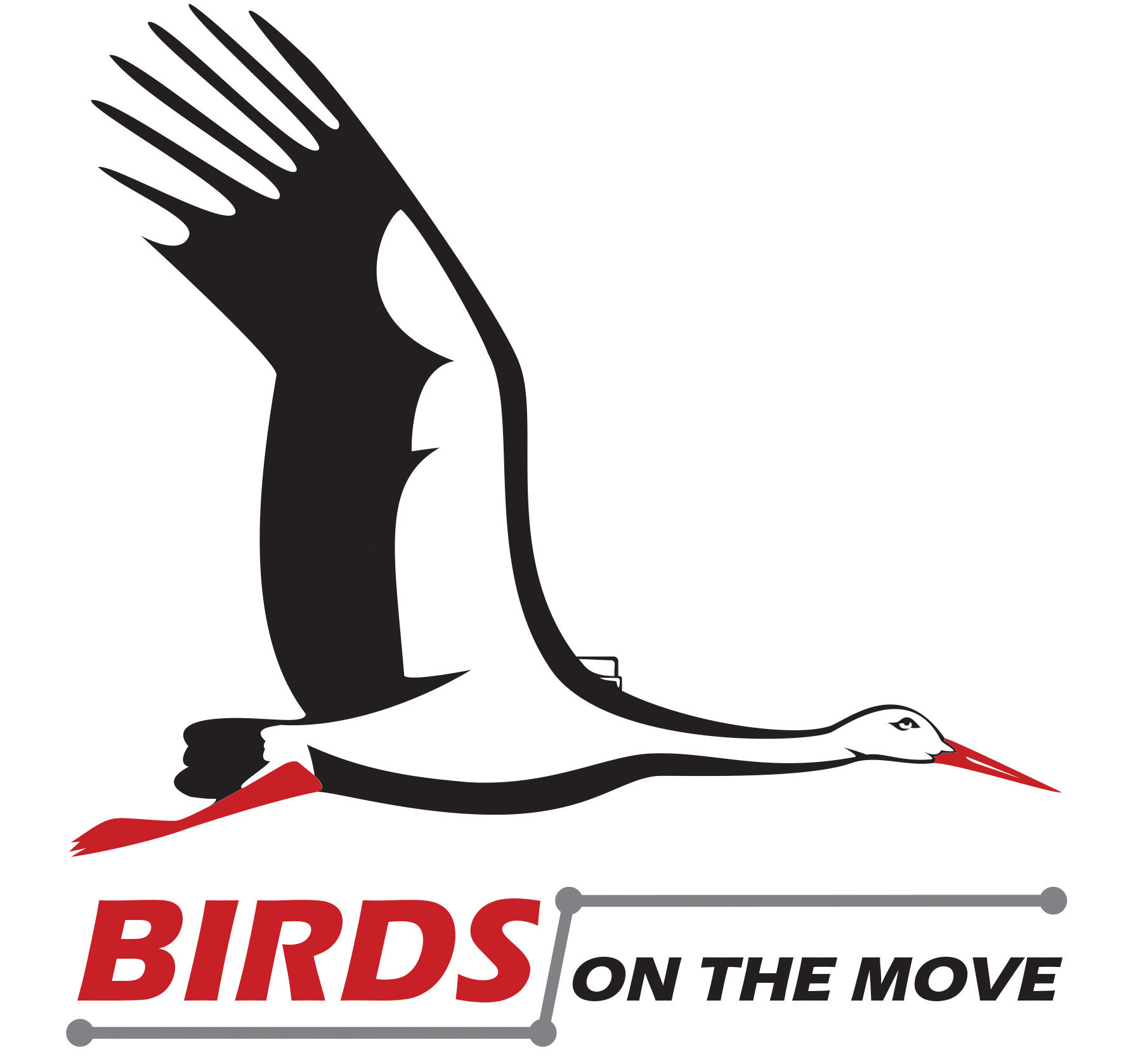 BIRDS ON THE MOVE